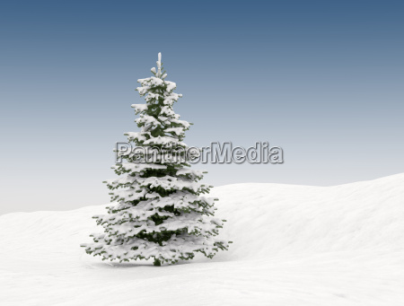 snow covered christmas tree winter