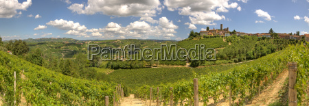 panoramic view on vineyards and small