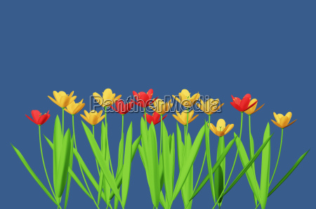 red and yellow flowers isolated on