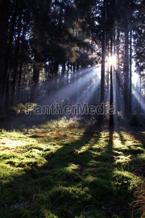 tree trees sunbeams mood moss shaddow