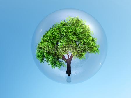 bubble tree globe circle sphere glass
