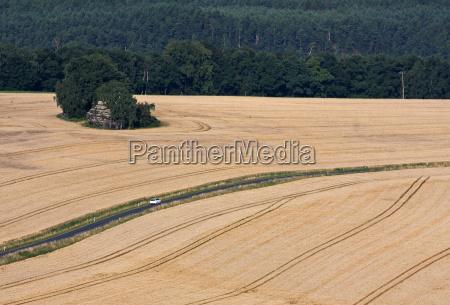 drive through summer fields