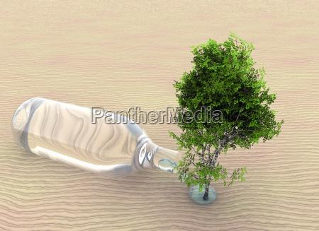 tree and desert
