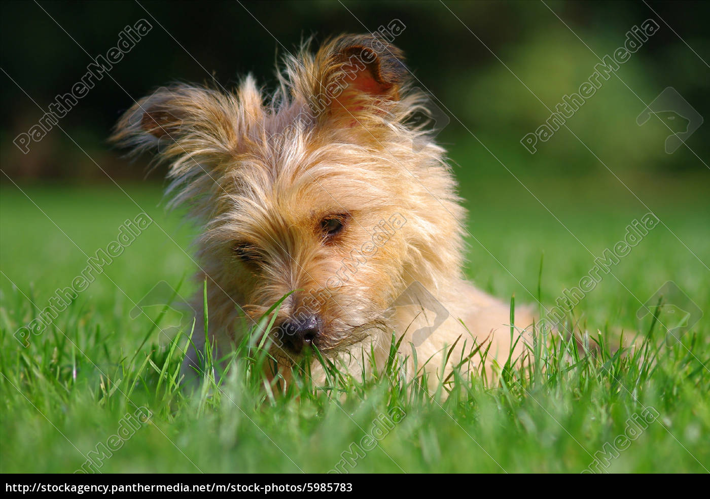 my, dog - 5985783
