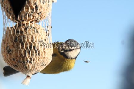winter, feed - 6090355