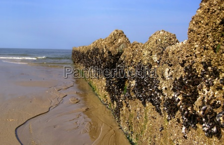 groynes with mussel wax on sylt
