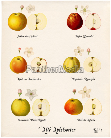collage old apple varieties plate 1