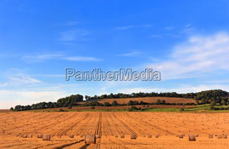 field summer summerly stubble field harvest