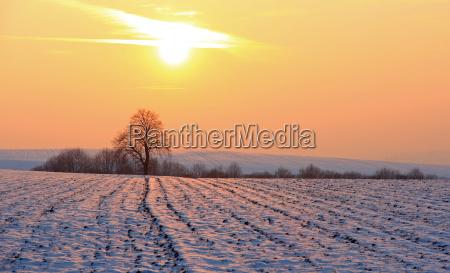 tree winter sunset field meadow snow