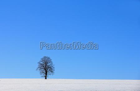 tree winter winter landscape lime firmament