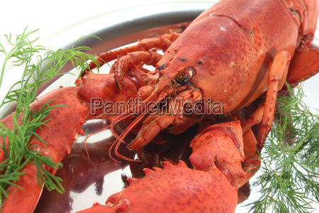 cooked lobster with dill