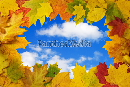 autumn leaves against blue sky background