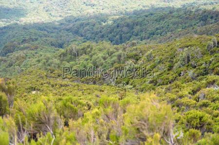 vegetation around mount muhabura in uganda