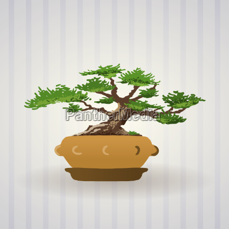 bonsai tree vector art