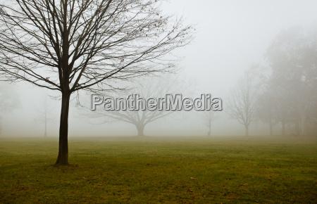 fog on the rhine