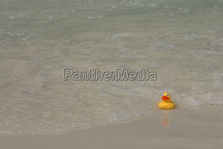 rubber duck in surf facing