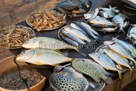 fish market in kerala india