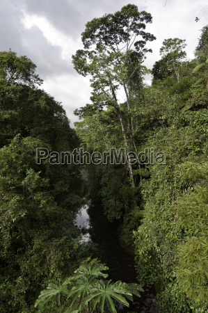 rainforest rain forest river water