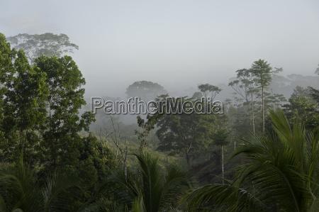 virgin forest fog flora tomorrow tendency