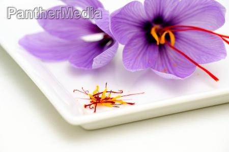 saffron flowers and stamens