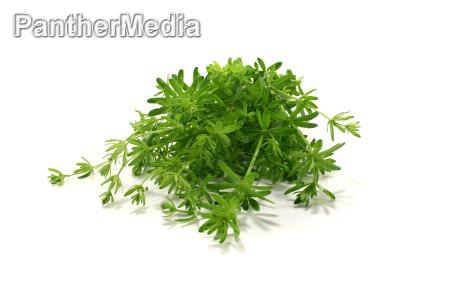 green lab herb
