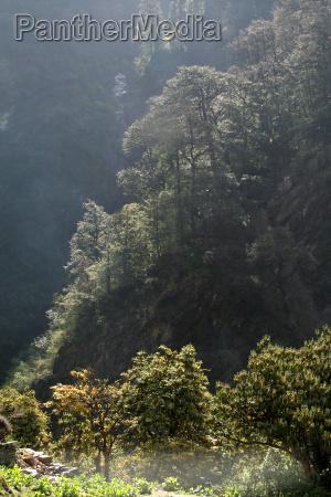 sunlight soaked trees