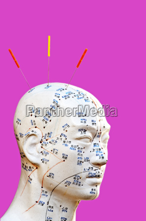 acupuncture head model