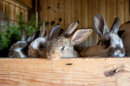 rabbits in the barn