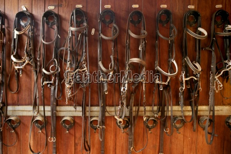 horse riders complements rigs reins
