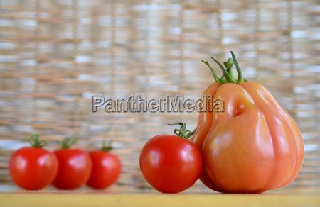 tomato composition still life