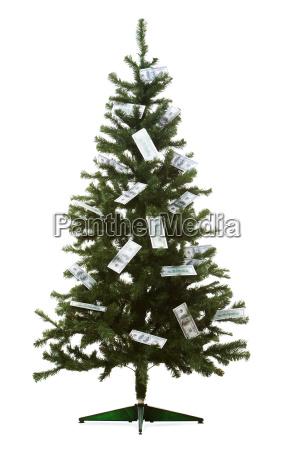 wealth firtree