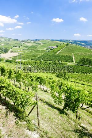 vineyars near grinzane cavour piedmont italy