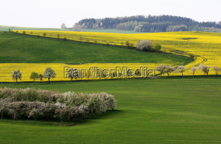spring fields meadows path way street