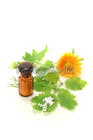 homeopathy with celandine