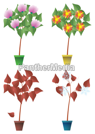 seasons plant