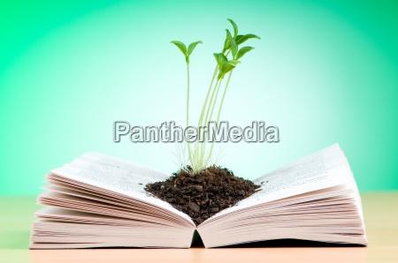 seedlings growing from book in knowledge