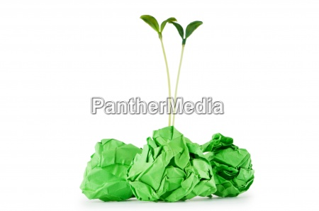 paper recycling concept with seedlings on
