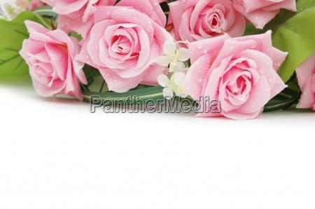 rosas en blanco utilice el