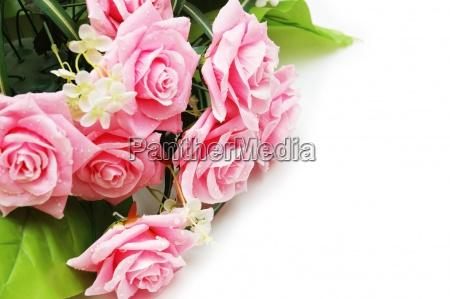 rosas con gotas de agua
