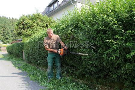 cut privet hedge