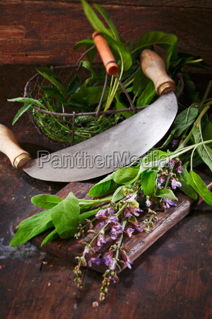 preparation of sage for cooking