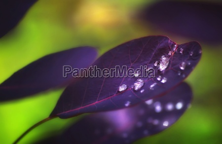 dewdrops, after, rain, on, a, purple - 7566824