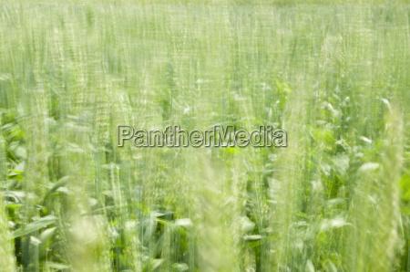 blurred grain
