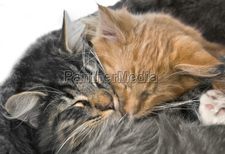 snuggling kittens