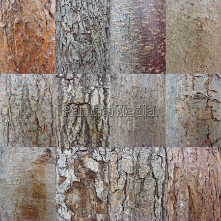 tree bark collage