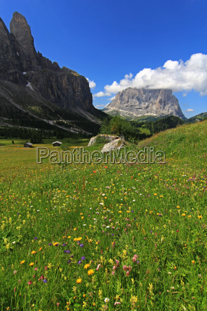 hike go hiking ramble alp flower