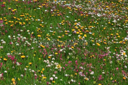 summer summerly blossoms flower meadow summer