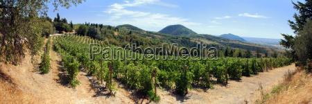vineyards in the euganean hills