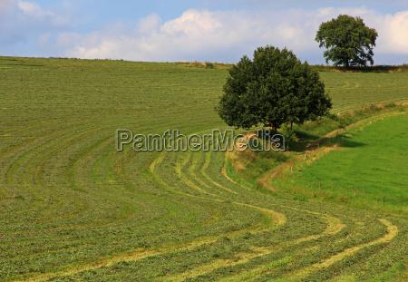 tree trees field path way meadow