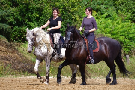riding, on, the, friesian, horse, in - 7839385